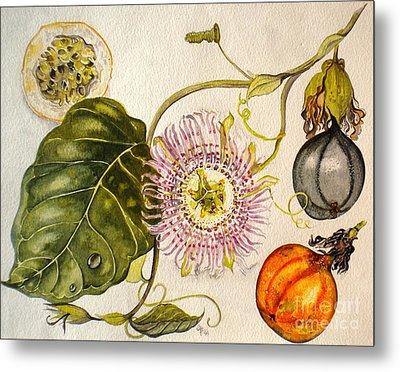 Metal Print featuring the painting Brazilian Passion Fruit             Passiflora Ligularis Seme by Sandra Phryce-Jones
