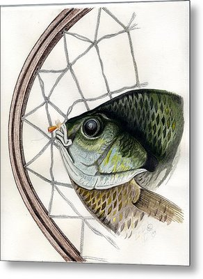 Bream And Net Metal Print by H C Denney