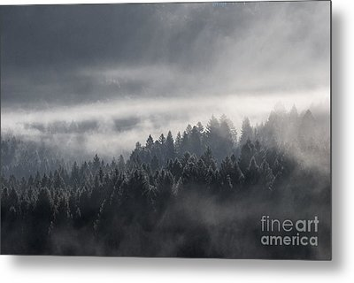 Metal Print featuring the photograph Breath Of The Forest by Yuri Santin
