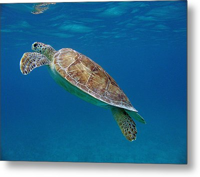 Breathe Green Metal Print by Kimberly Mohlenhoff