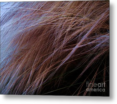 Metal Print featuring the photograph Breeze by Vanessa Palomino