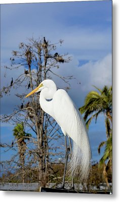 Breezy Egret Metal Print by Josy Cue