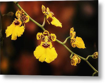 Bright And Beautiful Orchids Metal Print