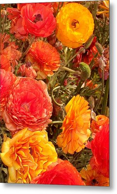 Bright And Sunny Metal Print by Jean Booth