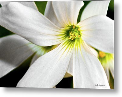 Bright Center Metal Print by Christopher Holmes