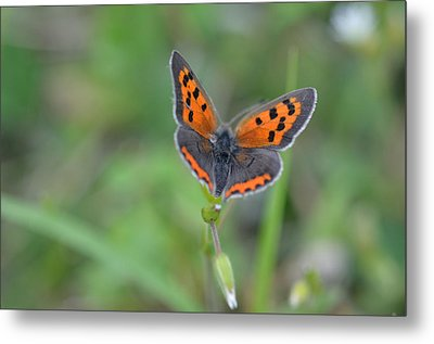 Bright Copper Metal Print by Janet Rockburn