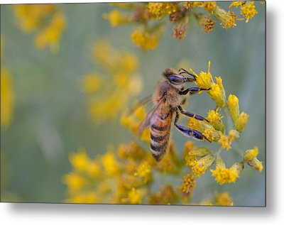 Bright Eyed Bee Metal Print by Janet Rockburn