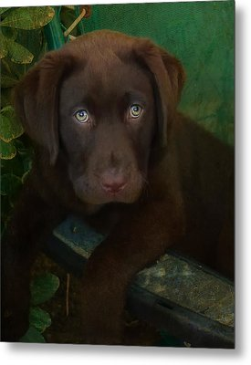 Bright Eyes Metal Print by Larry Marshall