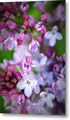 Bright Lilacs Metal Print