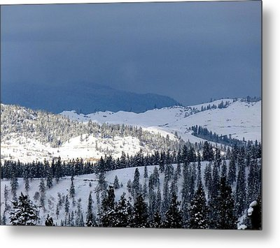 Metal Print featuring the photograph Bright Patch Of Sunshine by Will Borden