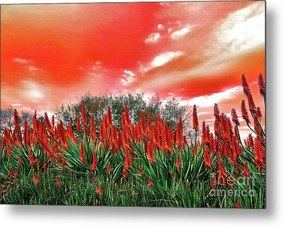 Metal Print featuring the photograph Bright Red Aloe Flowers By Kaye Menner by Kaye Menner