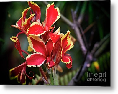 Metal Print featuring the photograph Bright Spot In My Day by Mary Machare