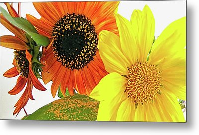 Bright Trio Metal Print by Kathy Bassett