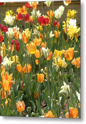 Metal Print featuring the photograph Bright Tulips by Michael Flood