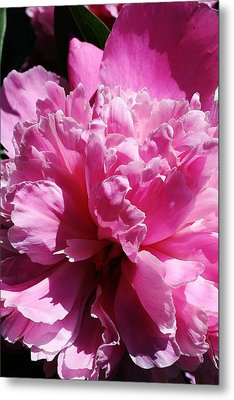 Brillant Pink Peony Metal Print by Bruce Bley