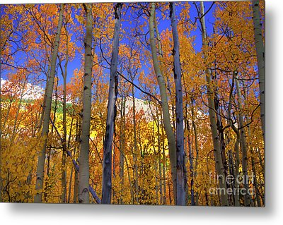 Brilliance Of Fall Metal Print by Barbara Schultheis