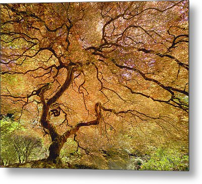 Metal Print featuring the photograph Brilliant Japanese Maple by Wanda Krack