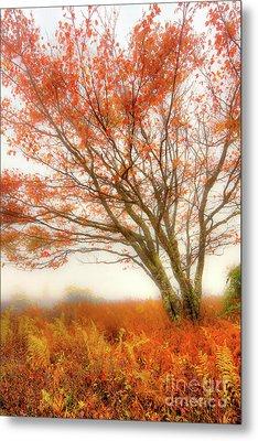 Metal Print featuring the photograph Brilliant Orange Autumn Fall Colors Tree by Dan Carmichael