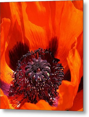 Brilliant Poppy Metal Print by Bruce Bley