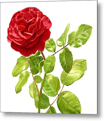 Brilliant Red Rose On A Stem Square Design Metal Print by Sharon Freeman