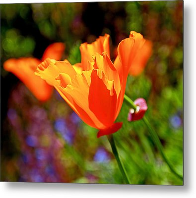 Brilliant Spring Poppies Metal Print
