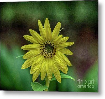 Brilliant Yellow Flower Metal Print