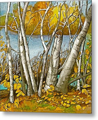 Broken Birch  Metal Print