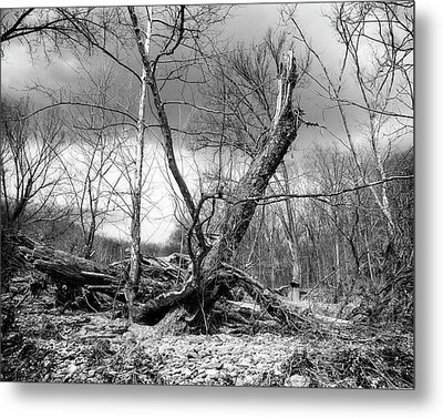 Metal Print featuring the photograph Broken Tree by Alan Raasch