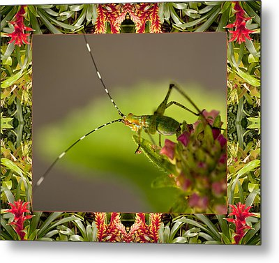 Bromeliad Grasshopper Metal Print by Bell And Todd