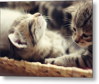 Brotherly Love Metal Print by Amy Tyler