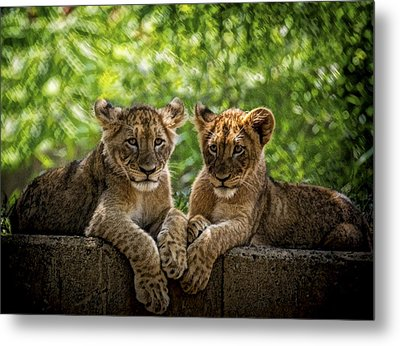 Brothers Chillin Metal Print by Cheri McEachin