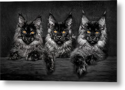 Brothers Metal Print by Robert Sijka