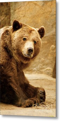 Metal Print featuring the photograph Brown Bear by Louise Fahy