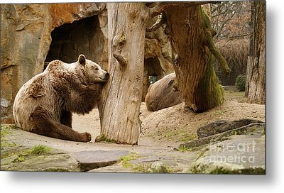 Metal Print featuring the photograph Brown Bears by Louise Fahy