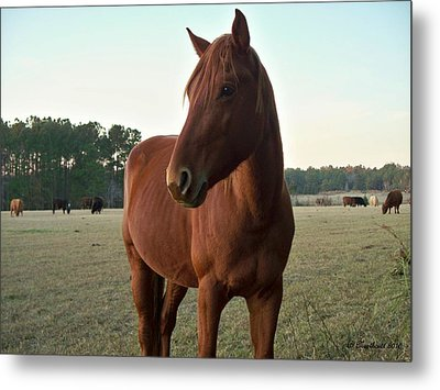 Metal Print featuring the photograph Brown Beauty by Betty Northcutt