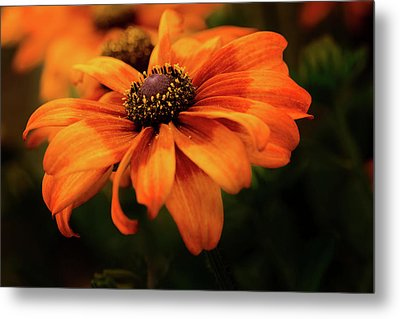 Metal Print featuring the photograph Brown Eyed Susan by Mary Jo Allen