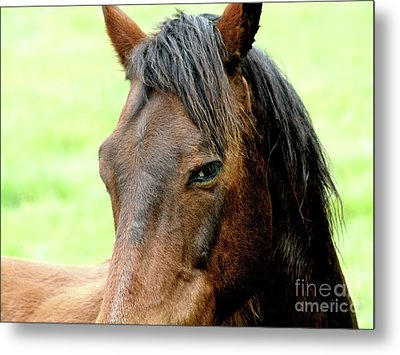 Brown Horse With Sultry Eye . R5907 Metal Print by Wingsdomain Art and Photography