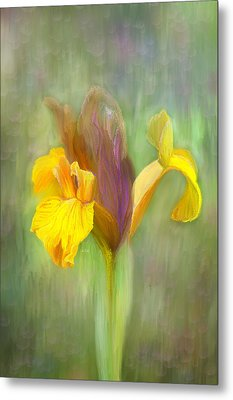 Brown Iris Metal Print by Angela A Stanton