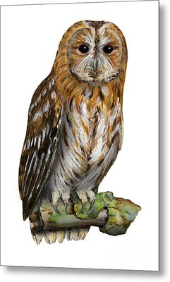 Metal Print featuring the painting Brown Owl Or Eurasian Tawny Owl  Strix Aluco - Chouette Hulotte - Carabo Comun -  Nationalpark Eifel by Urft Valley Art