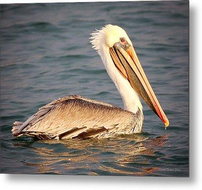 Brown Pelican Floating Metal Print