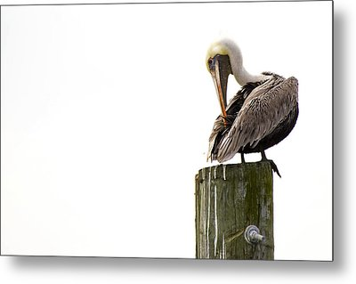 Brown Pelican On Piling Metal Print
