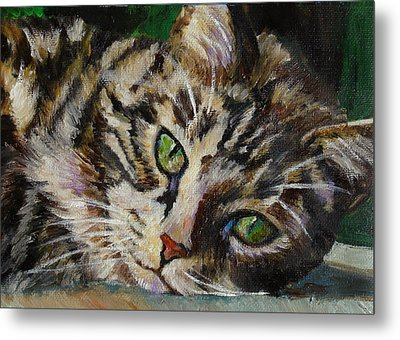 Brown Tabby Cat Metal Print