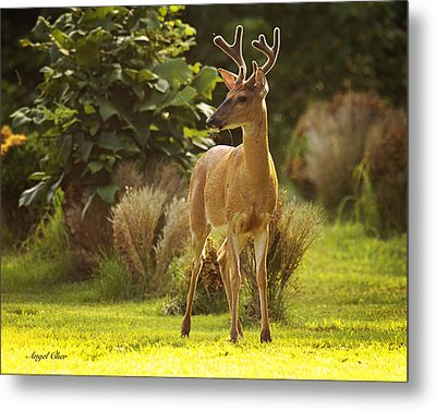Metal Print featuring the photograph Buck by Angel Cher
