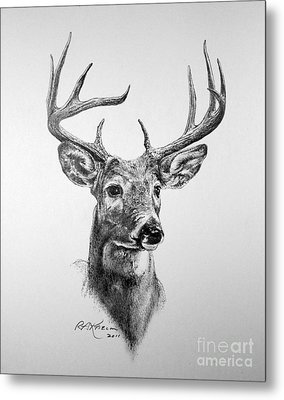 Buck Deer Metal Print