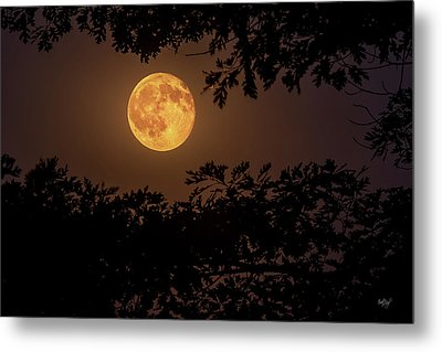 Buck Moon 2016 Metal Print by Everet Regal