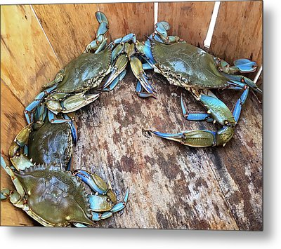Metal Print featuring the photograph Bucket Of Blue Crabs by Jennifer Casey