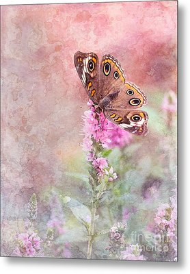 Metal Print featuring the photograph Buckeye Bliss by Betty LaRue