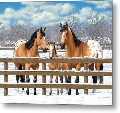 Buckskin Appaloosa Horses In Snow Metal Print by Crista Forest