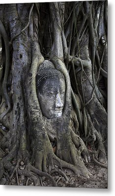Buddha Head In Tree Metal Print
