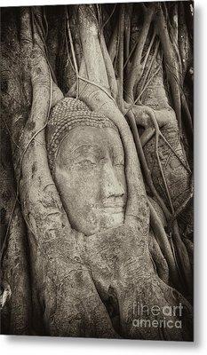 Buddha Head In Tree Metal Print